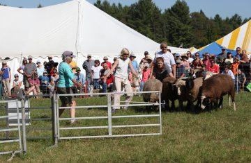wellscroft herding demonstrations